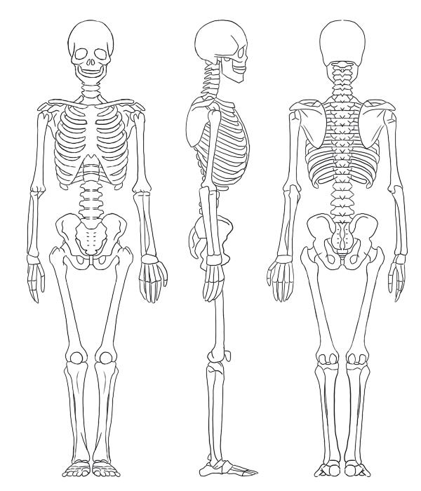 全身骨格図全身筋肉図を理解する 絵師ノート