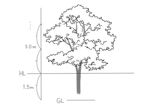 植物木の描き方 絵師ノート